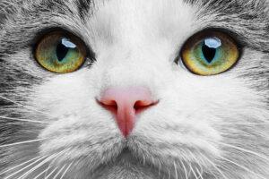 Das Gesicht einer Katze. Die Augen sind grün und die Pupillen, sind wie bei Katzen typisch, sichelförmig.