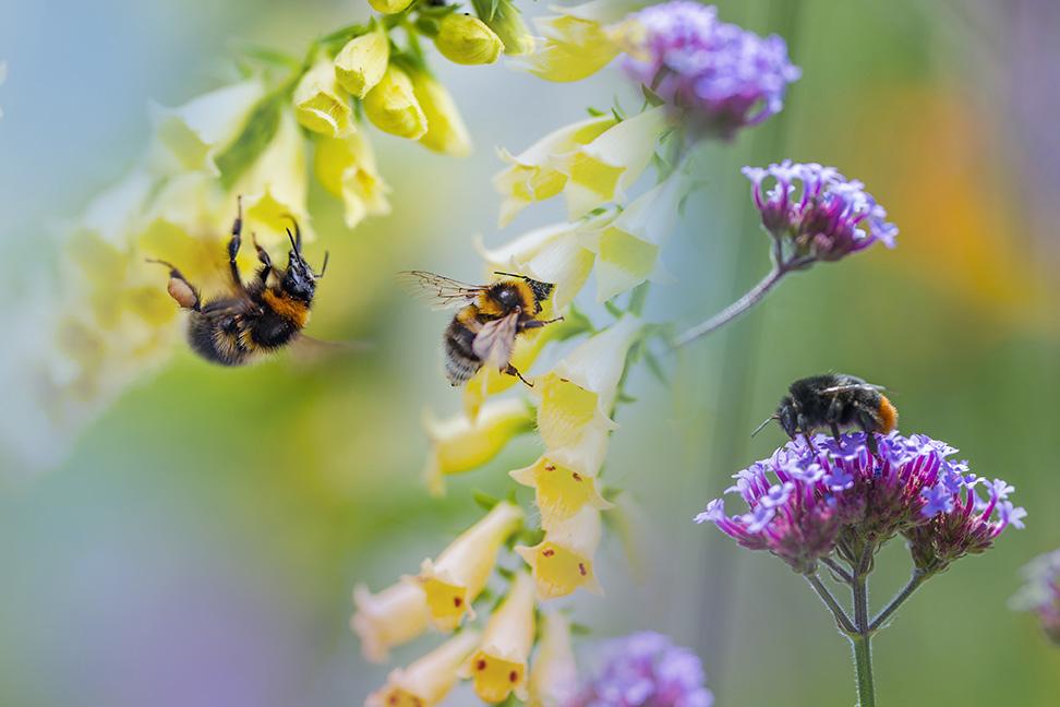 Die Welt durch Bienenaugen