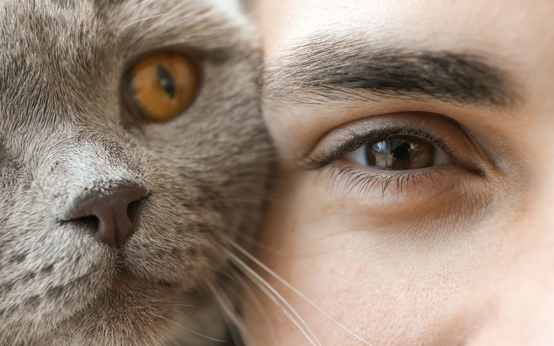 Ein gespaltenes Auge