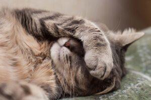 Eine Katze verdeckt mit einer Pfote ihre Augen.